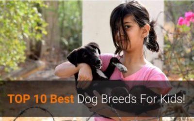 Top 10 Best Dog Breeds for Kids